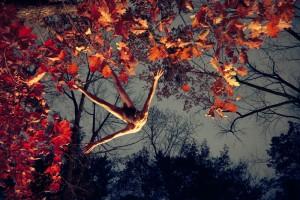 mcginley caiguda fulles